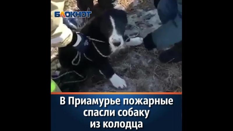 спасение собаки в приамурье