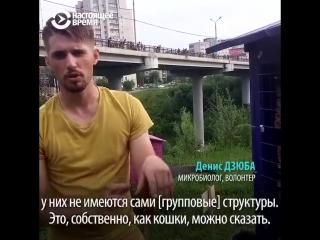В Перми активисты расчистили долину речки Егошихи