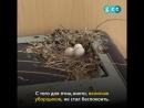 Теперь у голубей, которые свили гнездо на принтере, есть птенцы