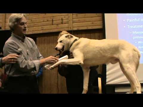 Sled dog examination sore wrist by Tim Hunt