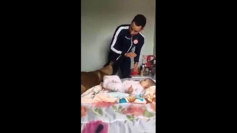 Собака защищает ребенка