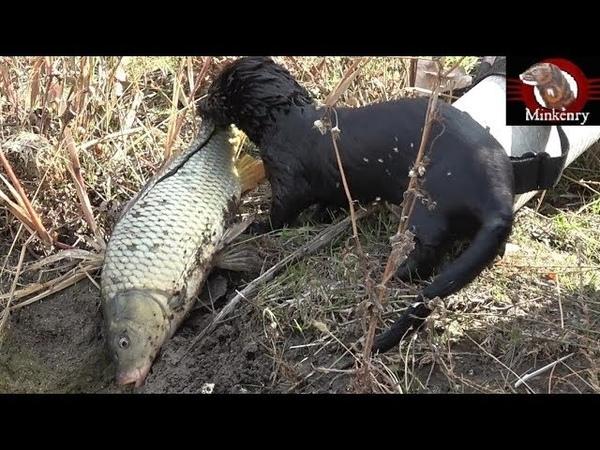 Black Mamba Catching Big Fish   Episode 9- Black Mamba: Born to Hunt - YouTube
