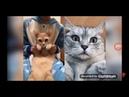 Кошки 2019 Смешные коты приколы с котами до слез