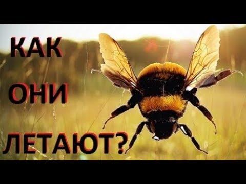 Почему полет насекомых не подчиняется законам физики