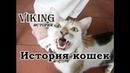 История кошек