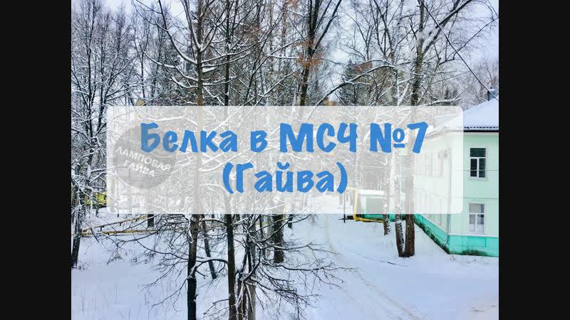 Белка в МСЧ №7 (Гайва)