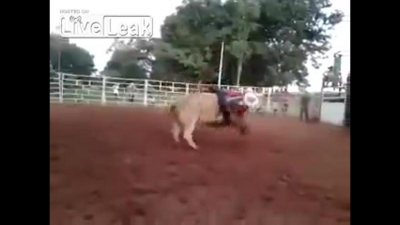 Бык растоптал голову ковбоя во время родео