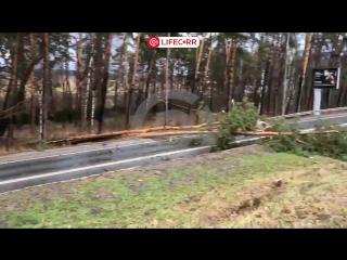 Упавшие в ураган деревья в Подмосковье, парализовали движения на Рублевке