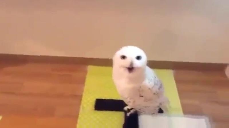 Как смеётся сова
