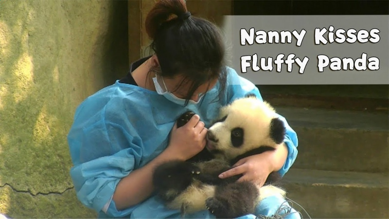 Nanny Can't Give Enough Kisses To Dearest Panda Baby iPanda
