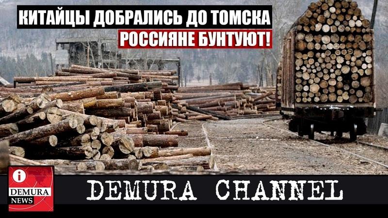 Сибиряки взбунтовались из-за китайской экспансии в Томской области