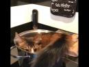 Кот укладывается в кастрюльку
