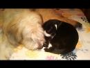 Пёс Тотоша и кот Масик. Милые зверушки не бранятся - они тешатся