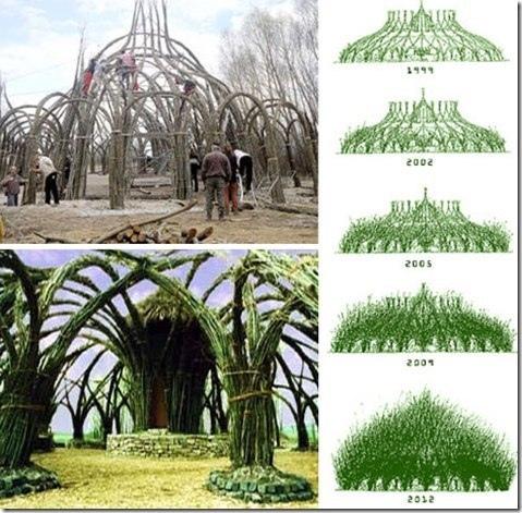 Удивительное свойство деревьев срастаться некоторые архитекторы используют в создании биоконструкций. Да, это довольно долго, но как красиво! А ещё, при использовании деревьев-долгожителей, такой дом или беседка будет стоять тысячелетиями даже без всякого