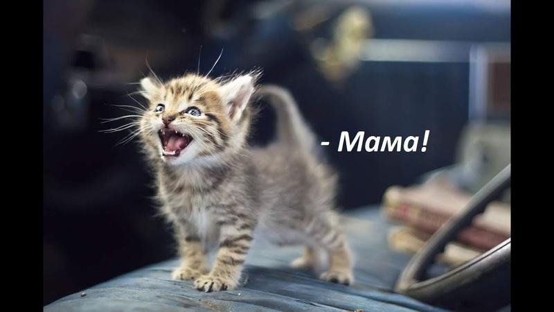 Говорящие коты! Лучшая подборка №10