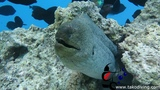 Scuba Diving with tako diving hurghada school.