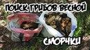 Поиск сморчков . Сбор грибов весной в лесу 2018