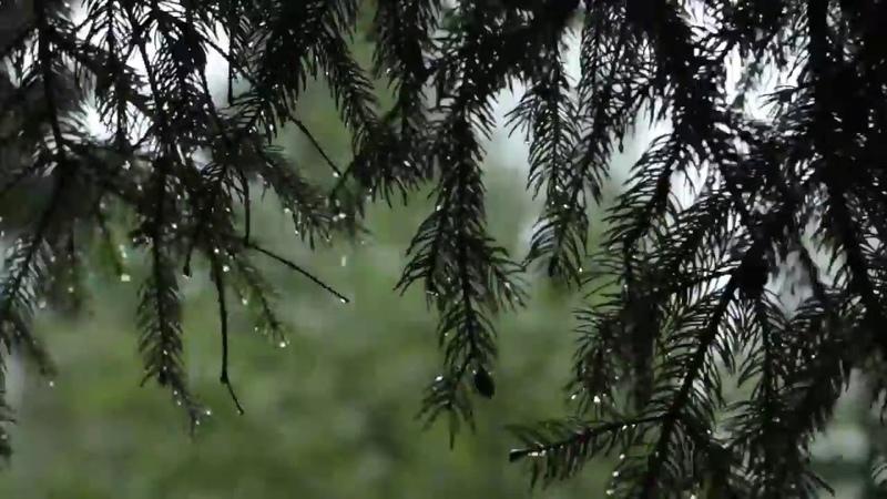 Звук дождя в лесу Звуки природы для релаксации 1 час