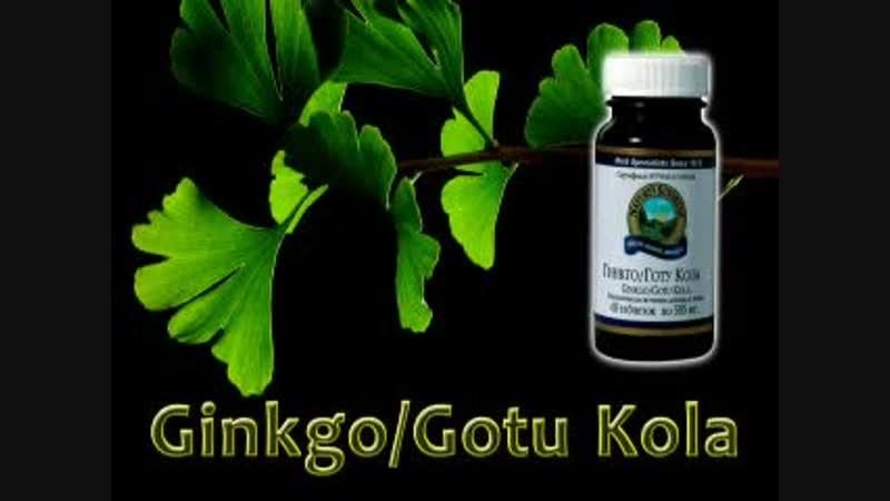 GinkgoGotu Kola от NSP - пища для мозга