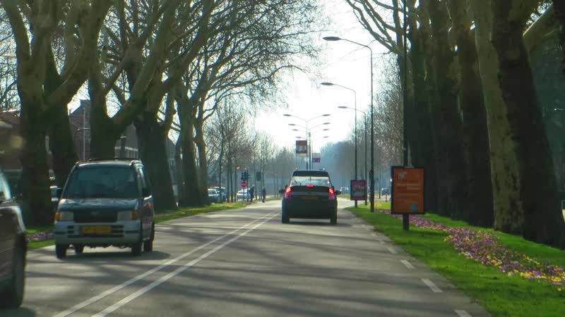 Нидерланды 17 февраля выглядят именно ТАК - по обочинам дорог вовсю цветут чудесные яркие весенние крокусы