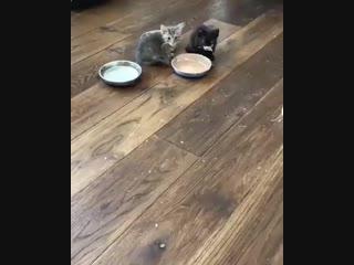 Это он еще сметану не ел 😅😁