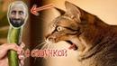 Приколы с котами с ОЗВУЧКОЙ – Смешные коты 2018 – Попробуй не засмеяться - Domi Show