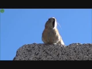 грызун Фредди делает каждое моё утро!)) Всем добра. Проснись и пой! #Богемскаярапсодия #Queen