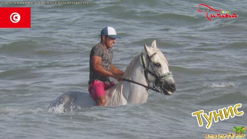 ТУНИС ДЖЕРБА Арабский белый скакун купается в море у отеля White Horse Tunisia Djerba