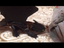 Беззубик и его друзья Вторая серия первого сезона сказки наночь