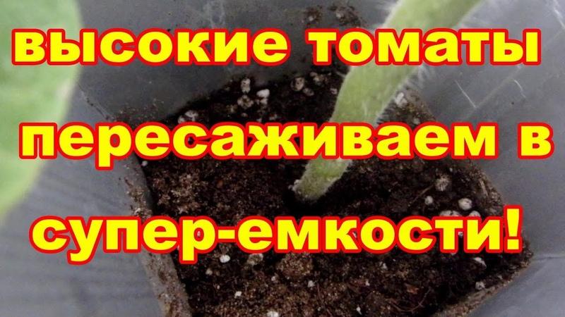 Супер-емкости для высокой рассады томатов