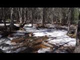 Гонимы вешними лучами, С окрестных гор уже снега Сбежали мутными ручьями