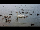 Лебединое озеро под Евпаторией.mp4