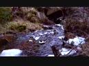Ноябрь, лесной ручей...