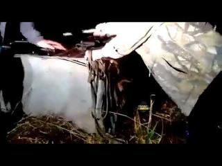 Новосибирцы нашли собаку в наглухо заколоченной будке в лесу
