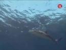 1989 Австралия Последний барьер - Подводная одиссея команды Кусто