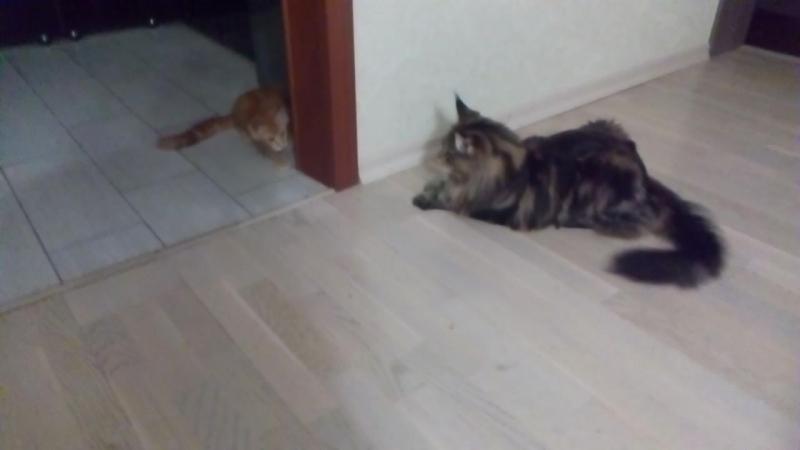 Перси и Бармоша
