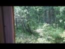 Показываю свой дом в лесу