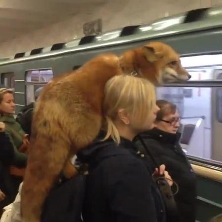 🦊 The Fox in Subway/Metro 🦊