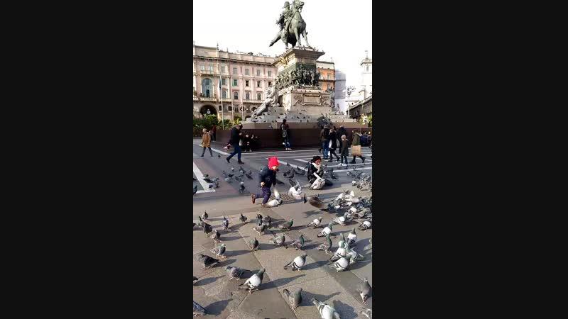 Милан. голуби