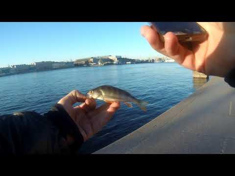 5 Street fishing, мать его, как он есть! 21.04.19