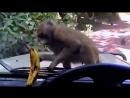 Вкусный банан. Видео прикол
