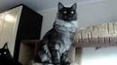 Котик Катерий 8 месяцев
