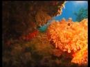 Дайвер CMAS ★ — Часть 5: «Водная среда»