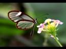 Бабочка. Музыка Сергея Чекалина. Butterfly. Music by Sergey Chekalin