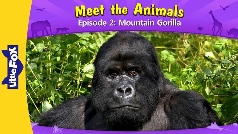 Meet the Animals 2: Mountain Gorilla | Level 2 | By Little Fox