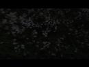 26 06 18 Новоуральск Соловьиные трели 4