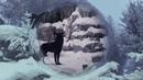 Black wolf and white she wolf Чёрный волк и белая волчица