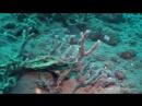 🔥 Leptocephalus the transparent larva of an eel 🔥