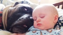 Funny Babies and Dogs are Best Friends - Fun and Fails Baby Video