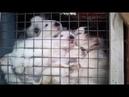 СПАСАЕМ маленьких КРОЛЬЧАТ они остались без крольчихи.